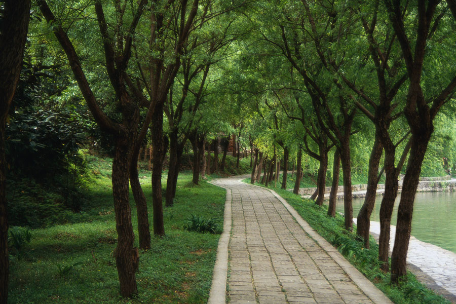 Trees Lining Path ca. 1993 Near Anshun, China