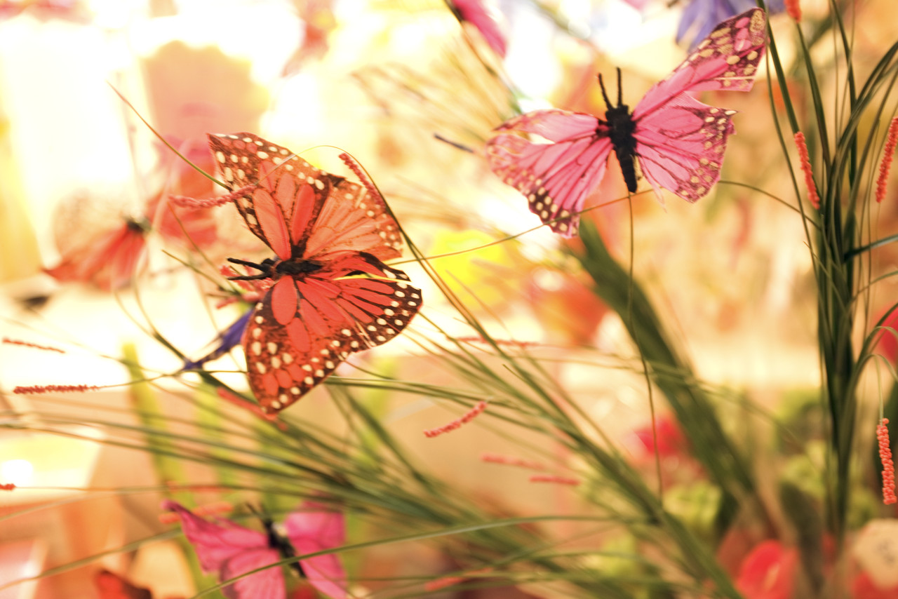 Paris, France --- Fake Butterflies --- Image by © Royalty-Free/Corbis